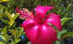 mexcellence-travel-nature-flowers-202001
