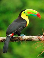 mexcellence-travel-nature-tucan-202001